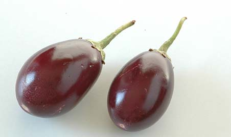 Purple Brinjal - Indian Variety