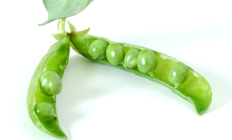 Fresh Green Peas of Summer