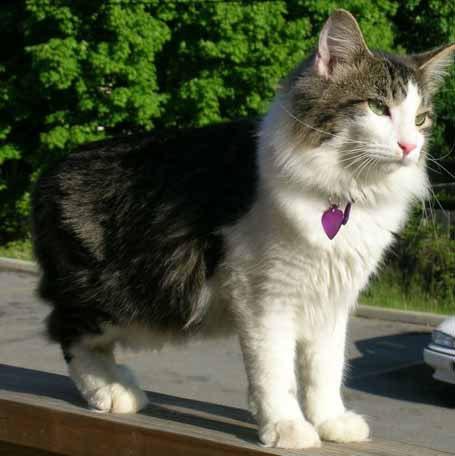 Kittaya standing on the deck wall