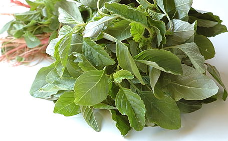 Chinese Spinach, Red Spinach, Fresh Amaranth, Thotakura