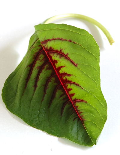 Thotakura (Amaranth, Red Spinach)